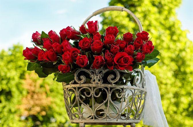 roses-1417263_960_720
